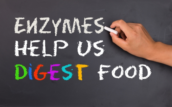 enzymes help us digest food